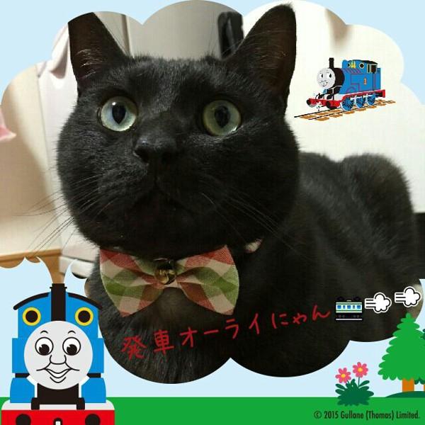 猫 黒猫 クロたんの写真
