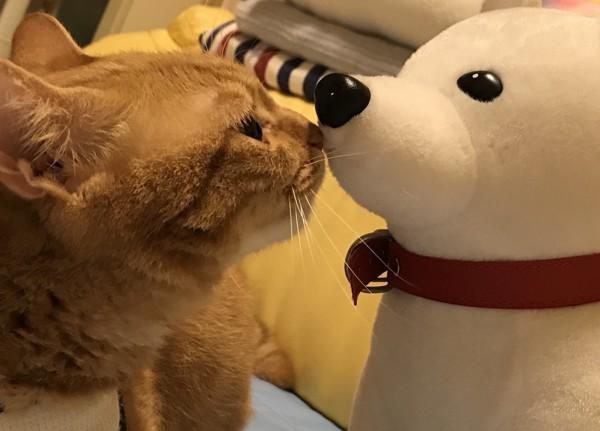 猫 雑種(ミックス) 福の写真