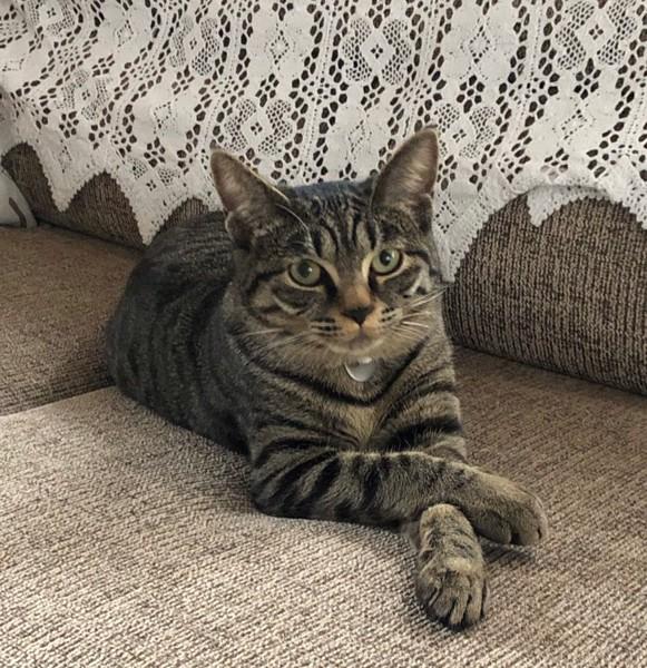 猫 MIX なこの写真