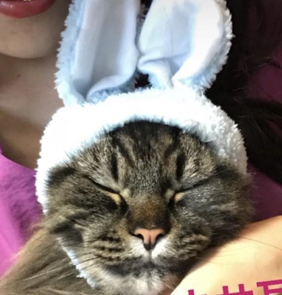 猫 メインクーン ぽんず【PONZU】の写真
