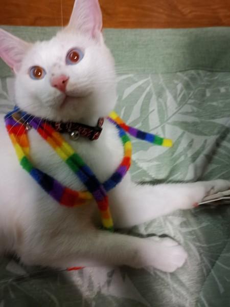 猫 雑種(ミックス) ぼんちゃんの写真