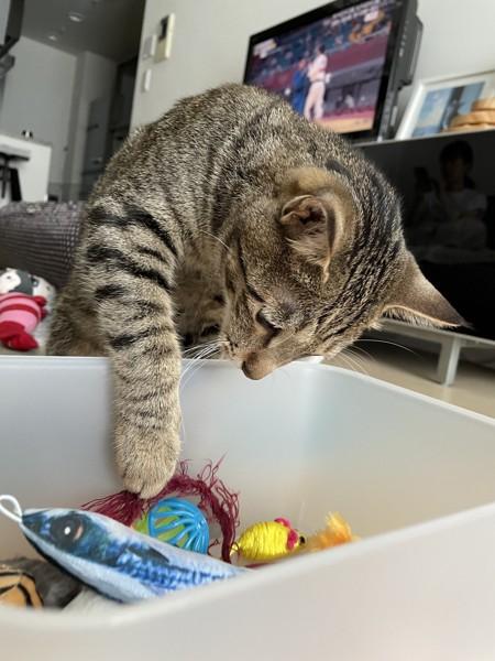 猫 キジトラ そらくんの写真