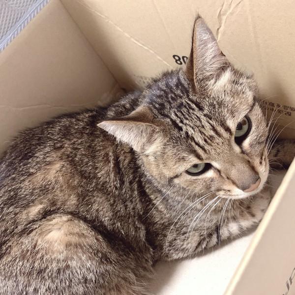 猫 キジトラ アスパラの写真