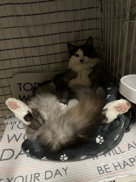 猫 雑種(ミックス) くぅの写真