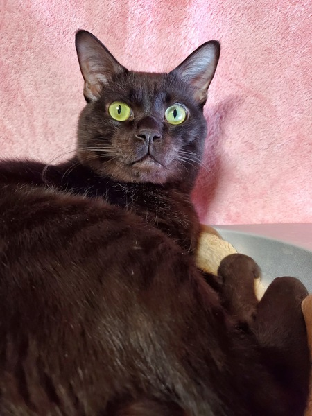 猫 黒猫 むむすけの写真
