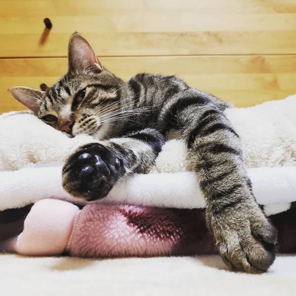 猫 キジトラ マックの写真