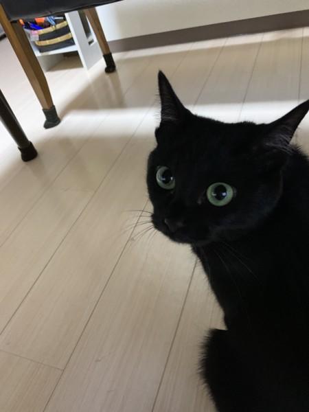 猫 黒猫 リーの写真