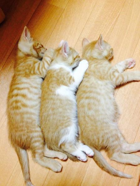 くっついてぬくぬくする三兄弟猫