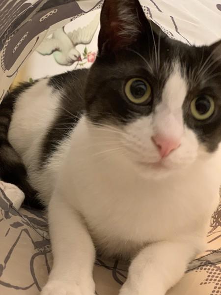 猫 雑種(ミックス) るぅの写真