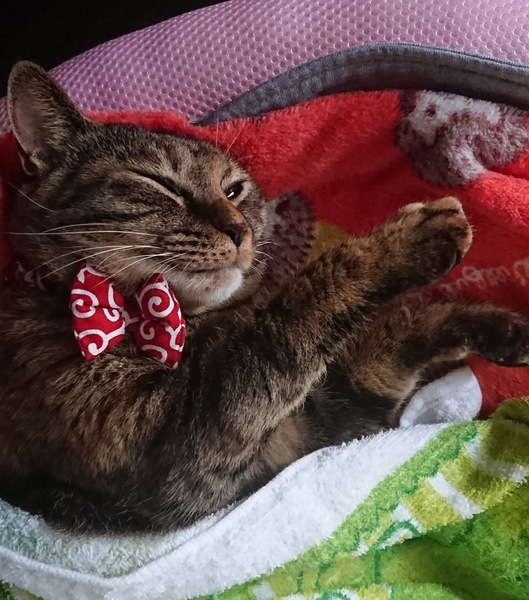 猫 雑種(ミックス) ニァーの写真