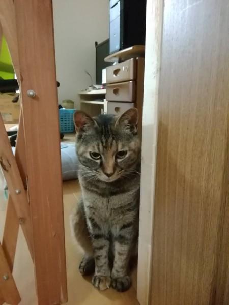 猫 雑種(ミックス) にゃーの写真