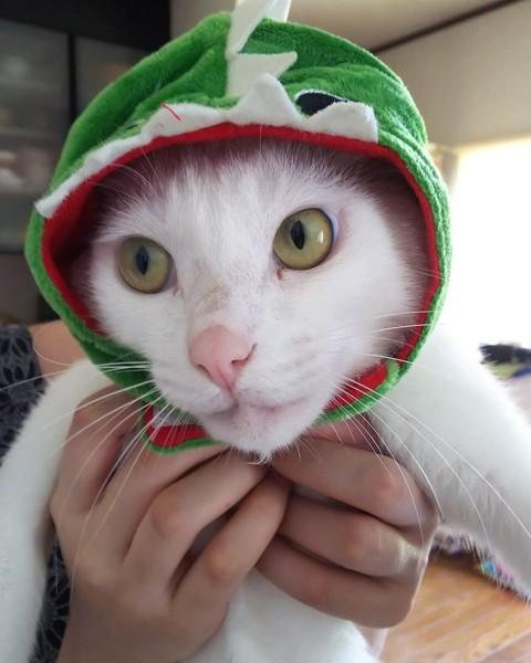 アンバーの白猫