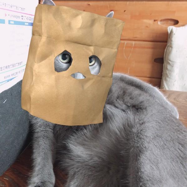 紙袋お化けのネコ
