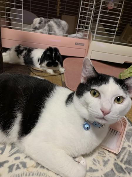 猫 雑種 テトの写真