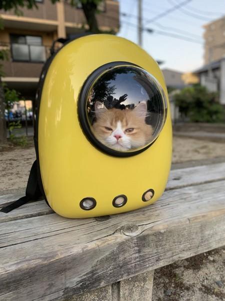 猫 サイベリアン すっくんの写真
