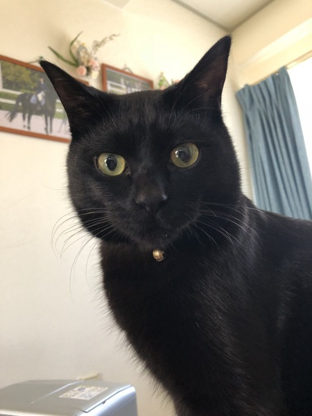 猫 雑種(ミックス) あらしくんの写真