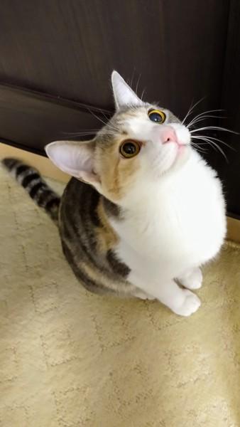 猫 雑種(ミックス) ももの写真