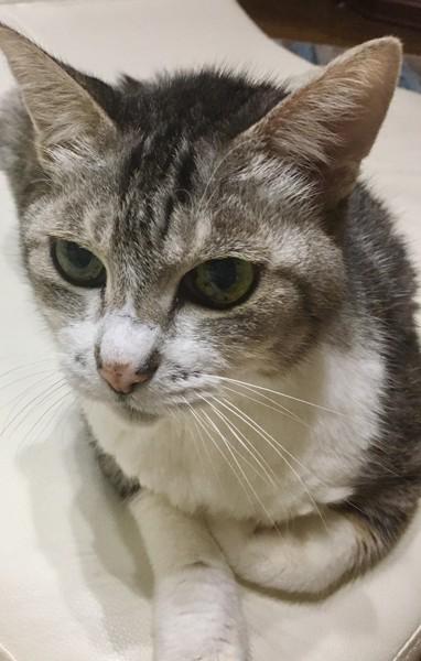 猫 雑種(ミックス) イチゴの写真