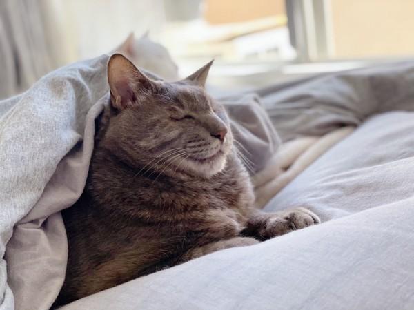 猫 雑種(ミックス) あいくんの写真