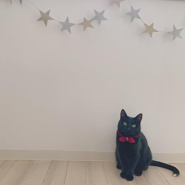 猫 黒猫 じじの写真