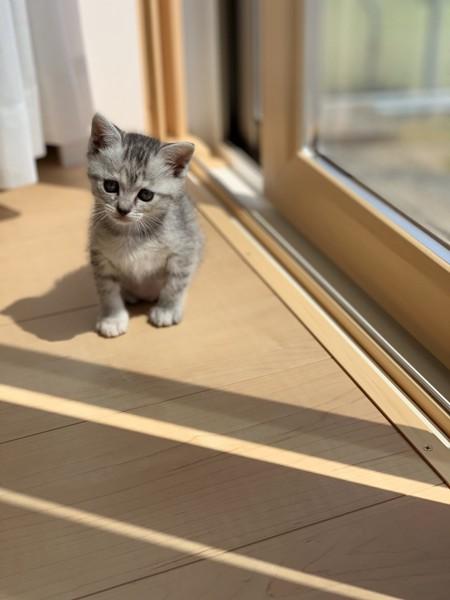 猫 サバトラ オリーブの写真