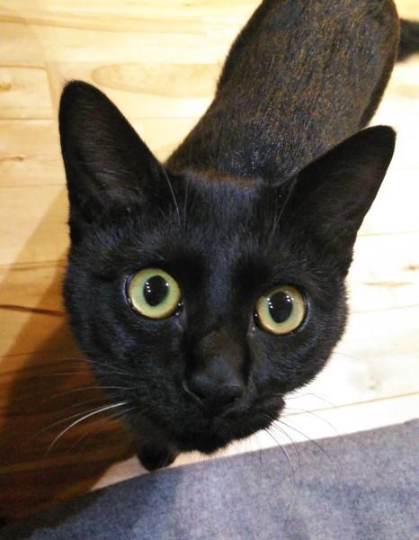 猫 黒猫 そらの写真