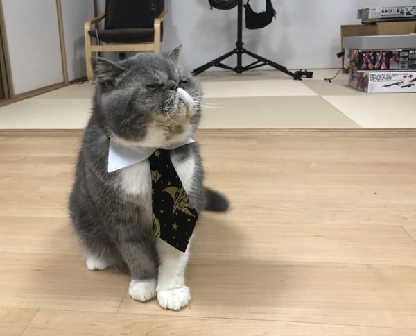 猫 エキゾチックショートヘア 銀太郎の写真
