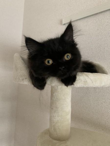 真っ黒でもふもふな子猫