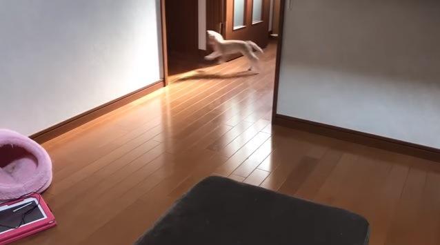 走る猫(画面奥・左向き)