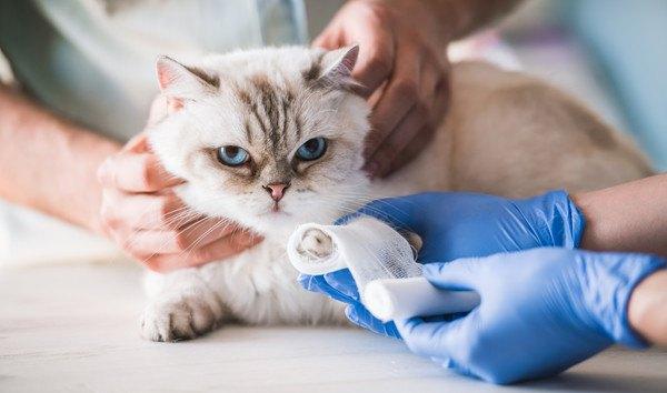 包帯を巻かれる猫