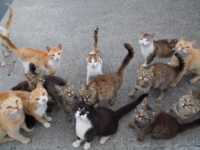 餌をもらうために集まる野良猫たち