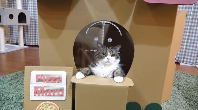 カウンターに手をつく猫