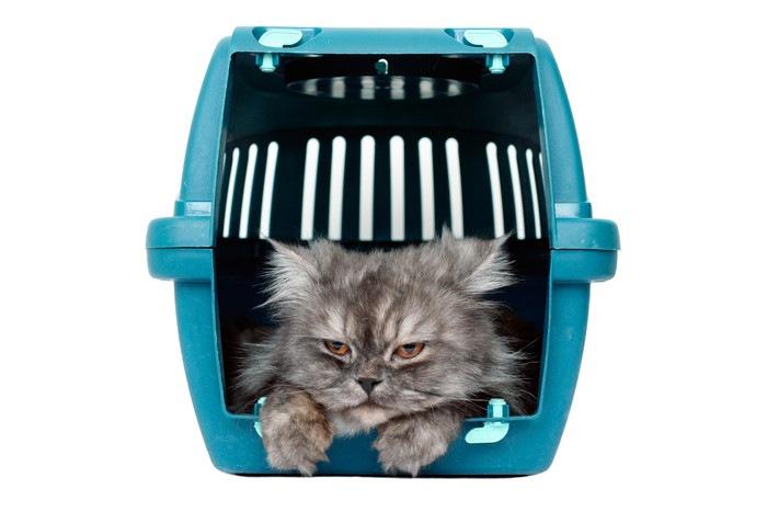 猫キャリーに入った長毛の猫