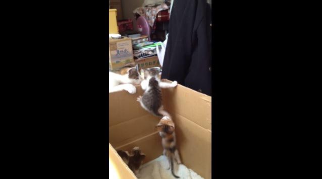 壁を登る子猫と母猫