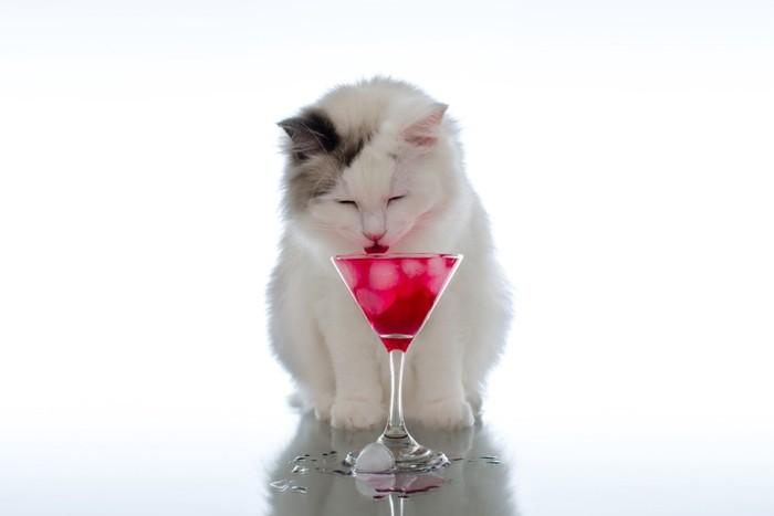 カクテルグラスの氷を舐める猫