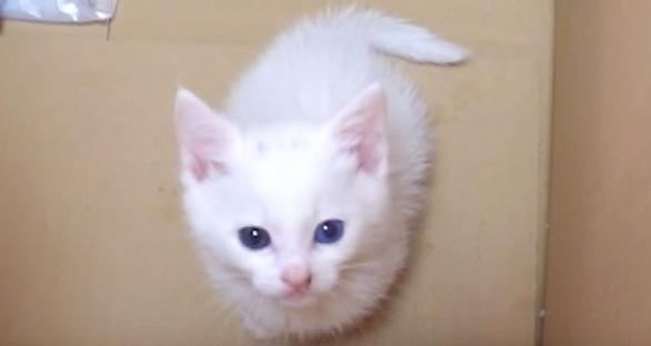 見上げる子猫の白猫