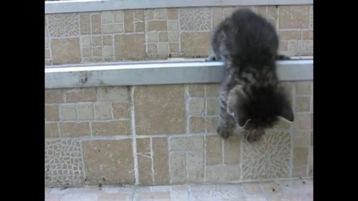 もう一段降りようとする猫
