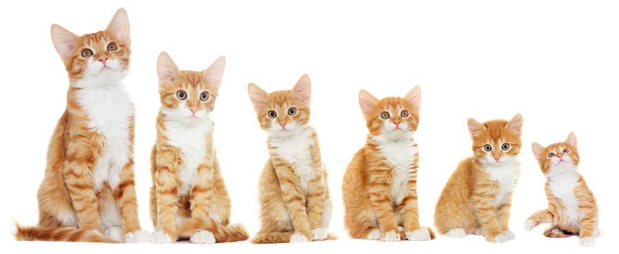 一列に並ぶ猫