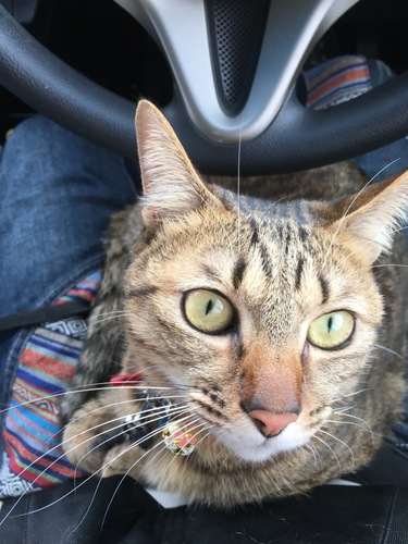 瞳孔が細くなっている猫