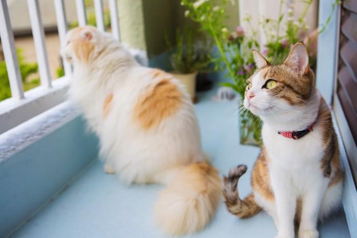 ベランダで外を眺める二匹の猫