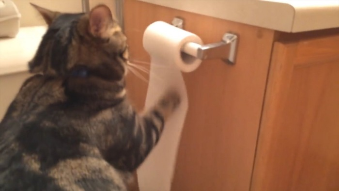 トイレットペーパーを出す猫