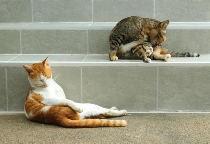 おっさん座りする猫2匹