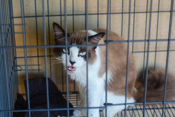 ケージの中で威嚇する猫