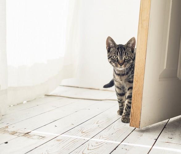 扉から出てきて様子を伺う猫