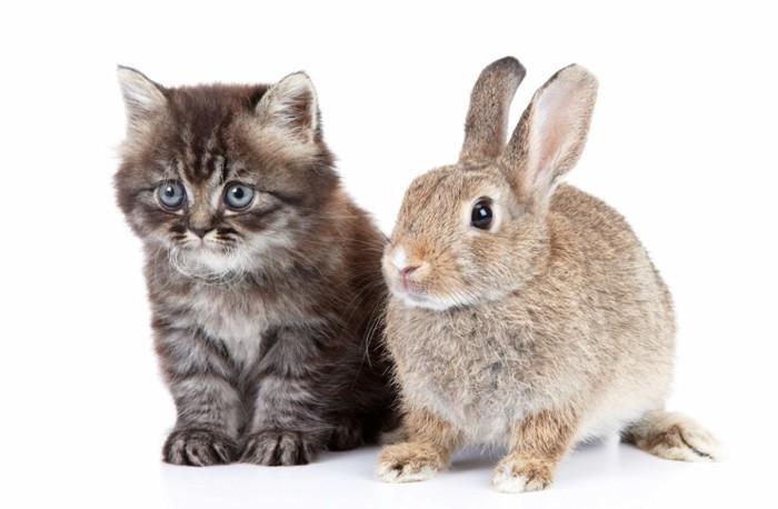 猫とうさぎのツーショット