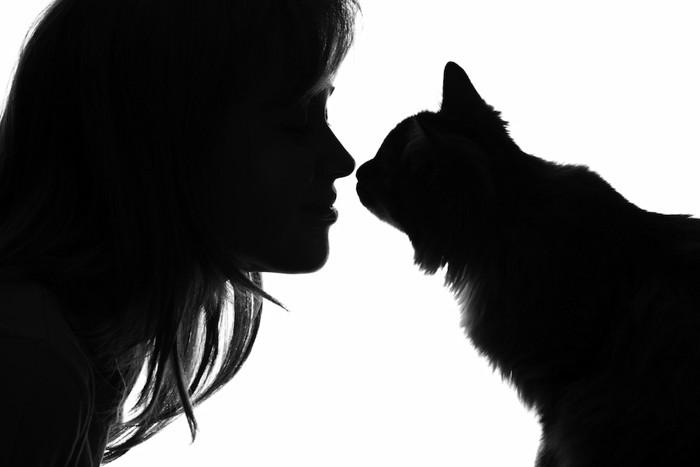 顔を近づける猫と女性のシルエット