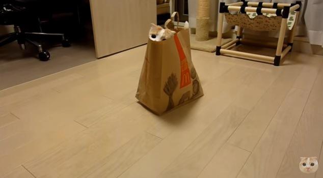 紙袋から顔を半分だけ出す猫