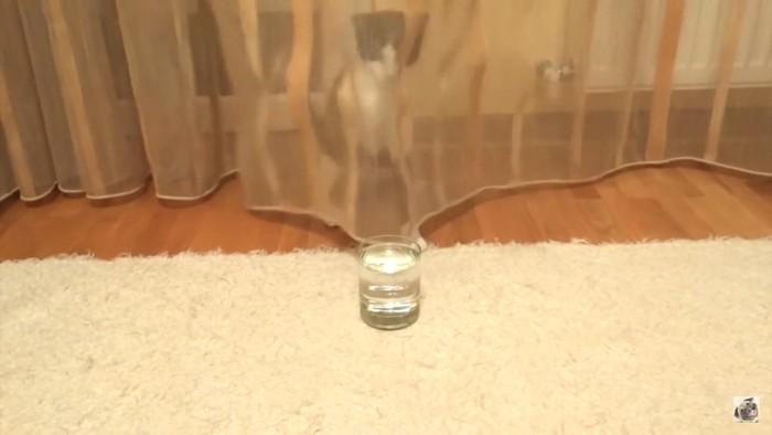 カーテンの裏から攻撃する猫