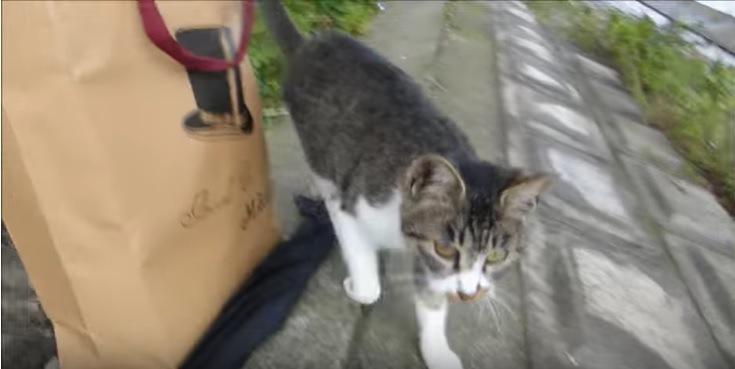 紙袋から離れこちらに向かい歩く猫