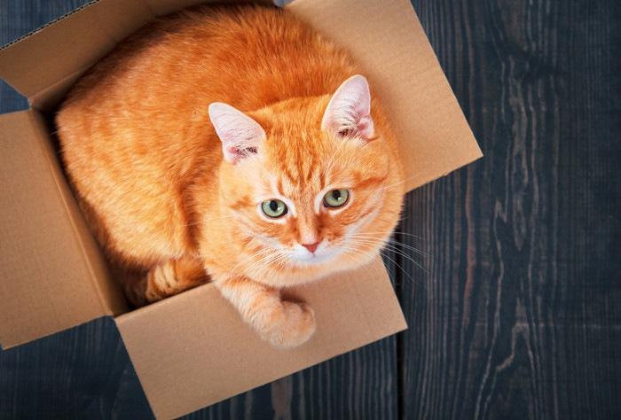 段ボールに入った猫